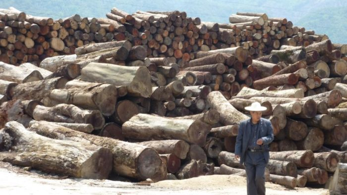 Logs smuggled across the land border from Myanmar into Yunnan province, China, April 2012 (c) EIA