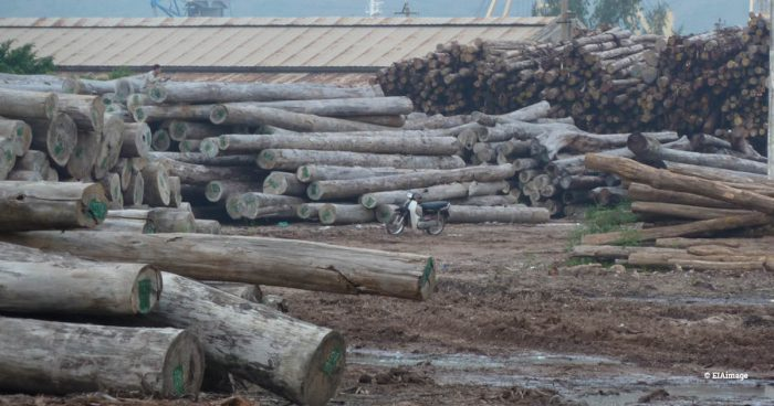Logs stolen from Laos by Vietnamese military in Quy Nhon Port, Vietnam