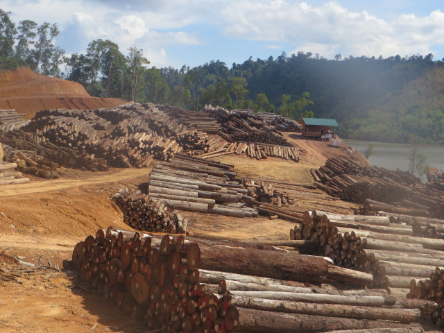 Logs taken from oil palm concession, Myanmar