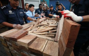 Malaysian officials with some of the ivory seized in December 2012 (c) Bazuki Muhammad & Reuters