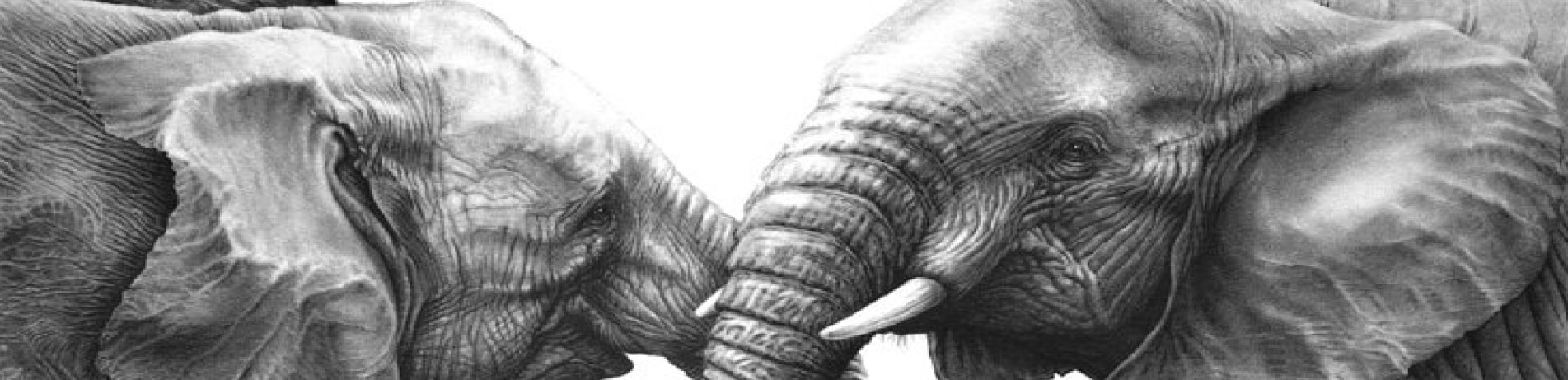 Print of two elephants, Gary Hodges