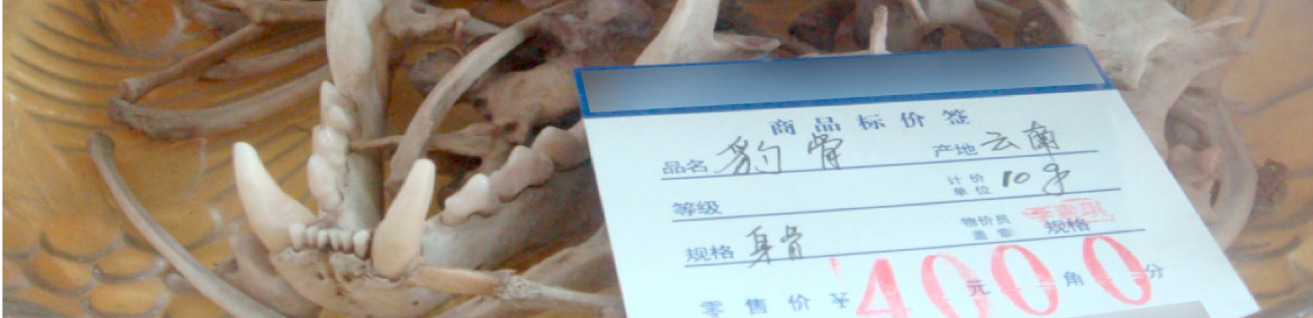 Leopard bone for sale, Chongqing, China