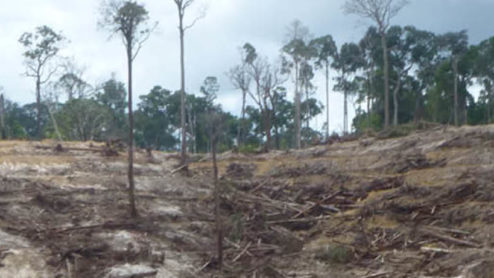 Deforested hillside in Indonesia