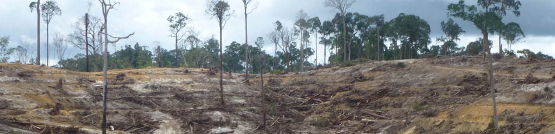 Deforested hillside in Indonesia
