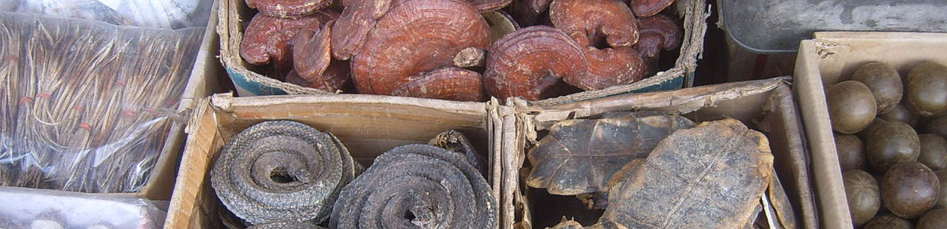 Dried plants and animals in boxes