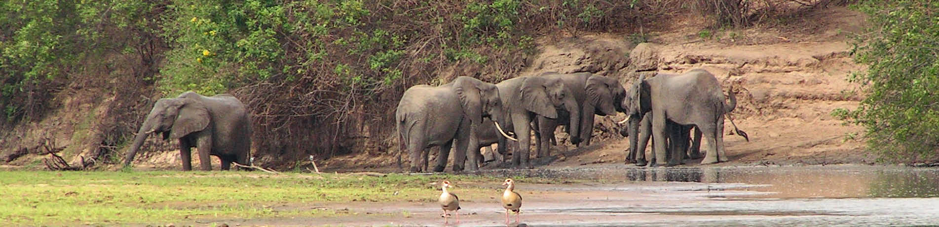 Elephants in the Selous Game Reserve, Tanzania