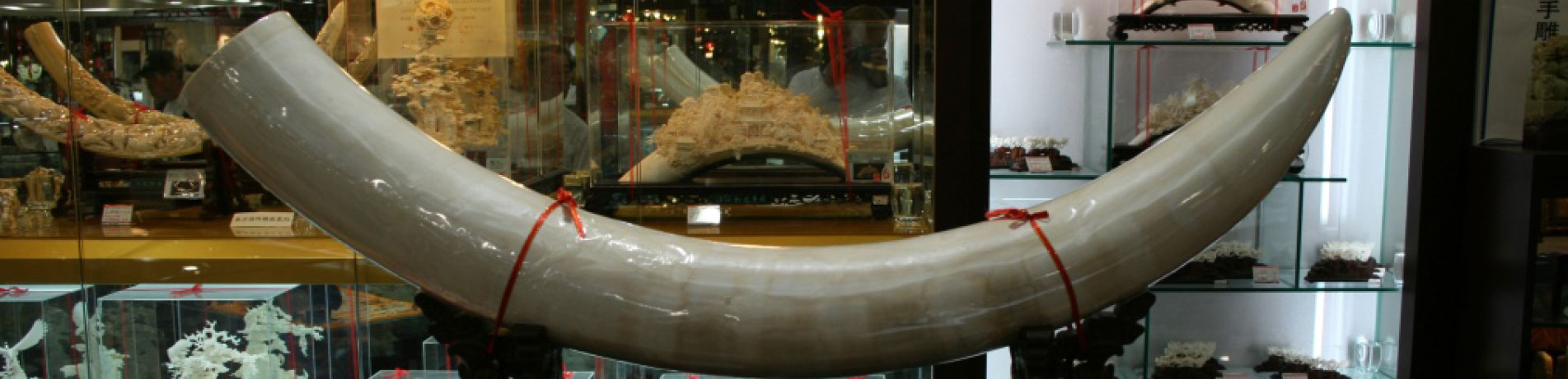 Elephant ivory displayed for sale in China