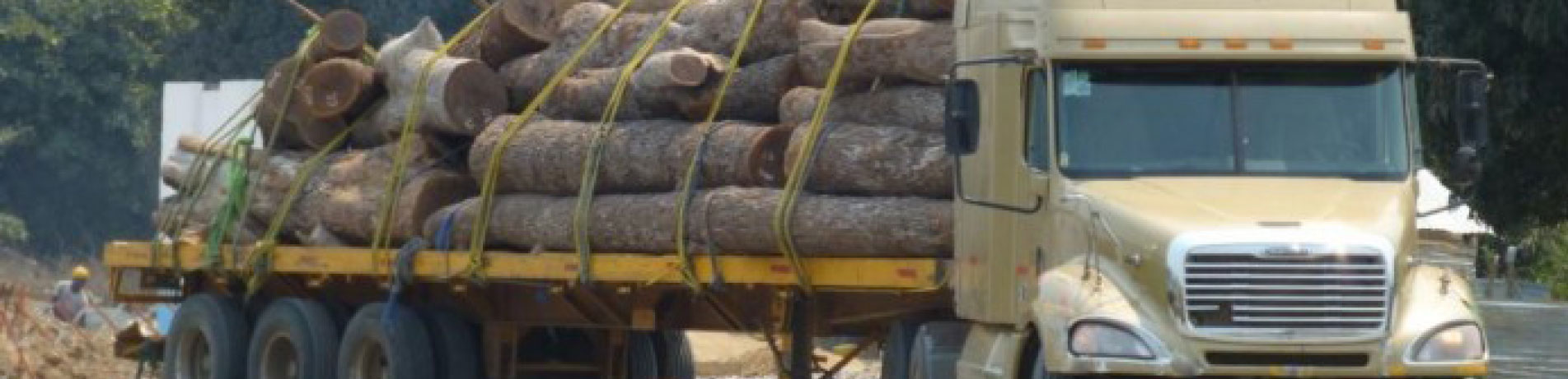 Timber logs being transported by truck in Mozambique