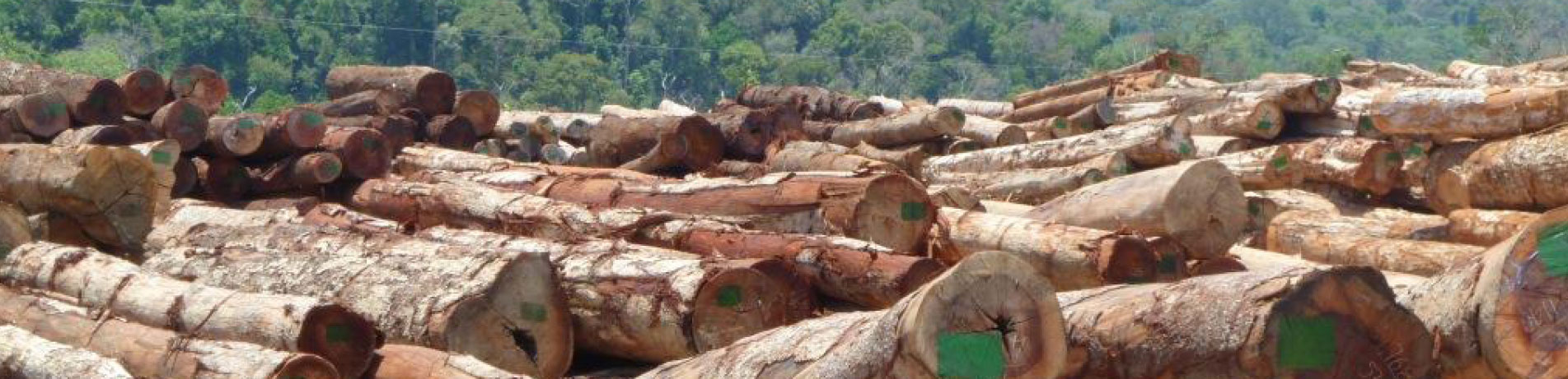 Stockplile of logs in Vietnam