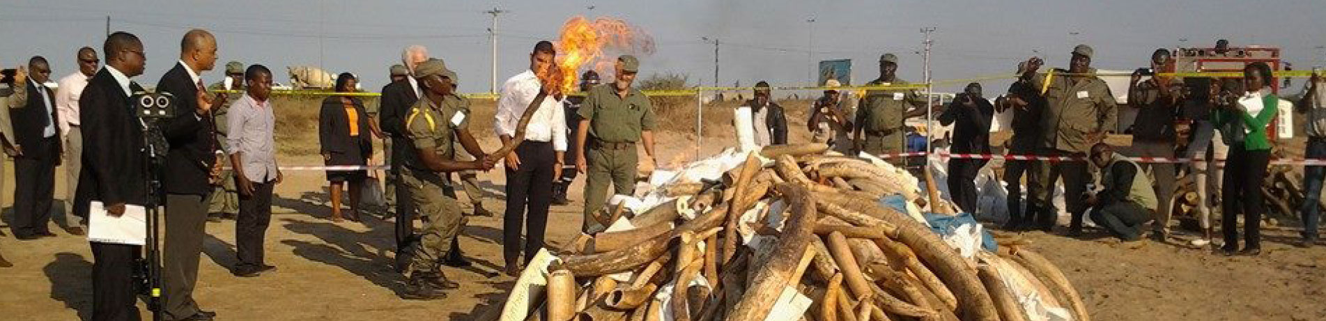 Mozambique officials burn a pile of seized ivory and rhino horns