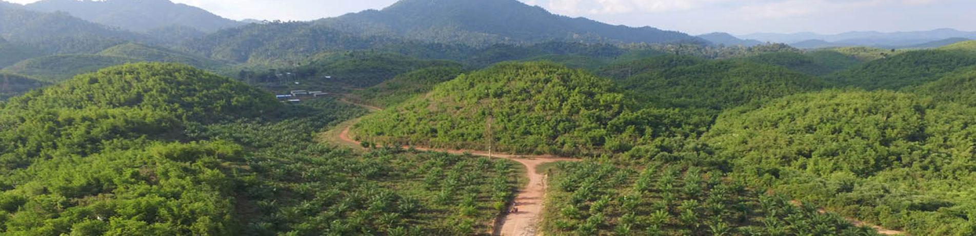 Palm oil plantation, Myanmar