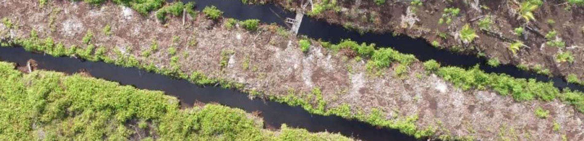 Aerial photo of deforested land, Sebangau National Park, Indonesia