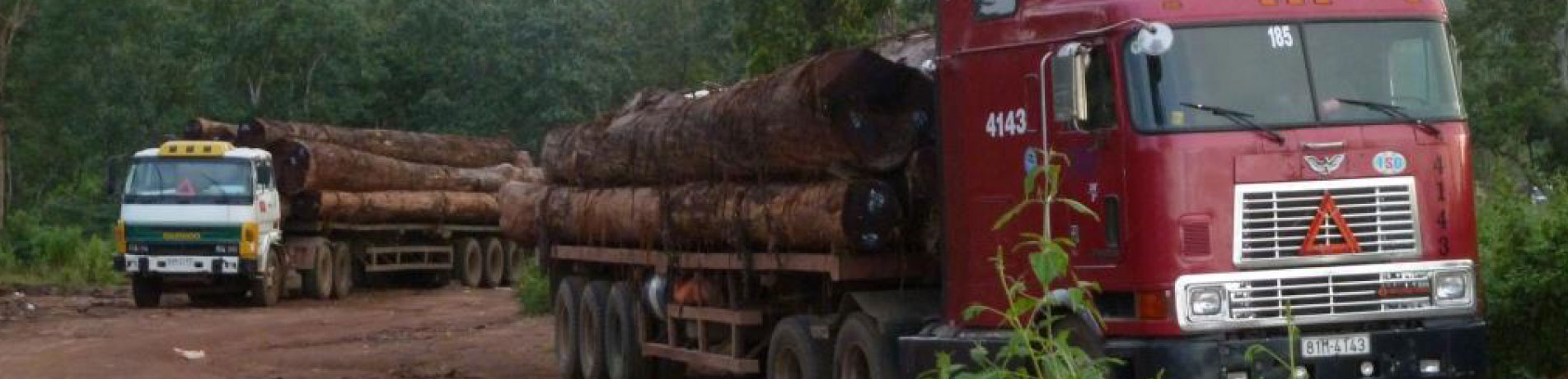 Trucks carrying a load of illegal timber in Laos