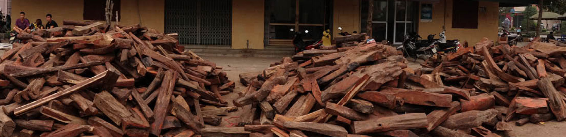 Stockpile of rosewood, Vietnam
