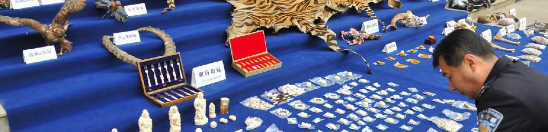 Seized illegal wildlife products are displayed by Yunnan police, China