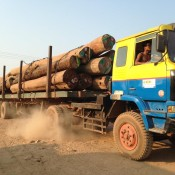 Hiatus in timber smuggling from Myanmar to China