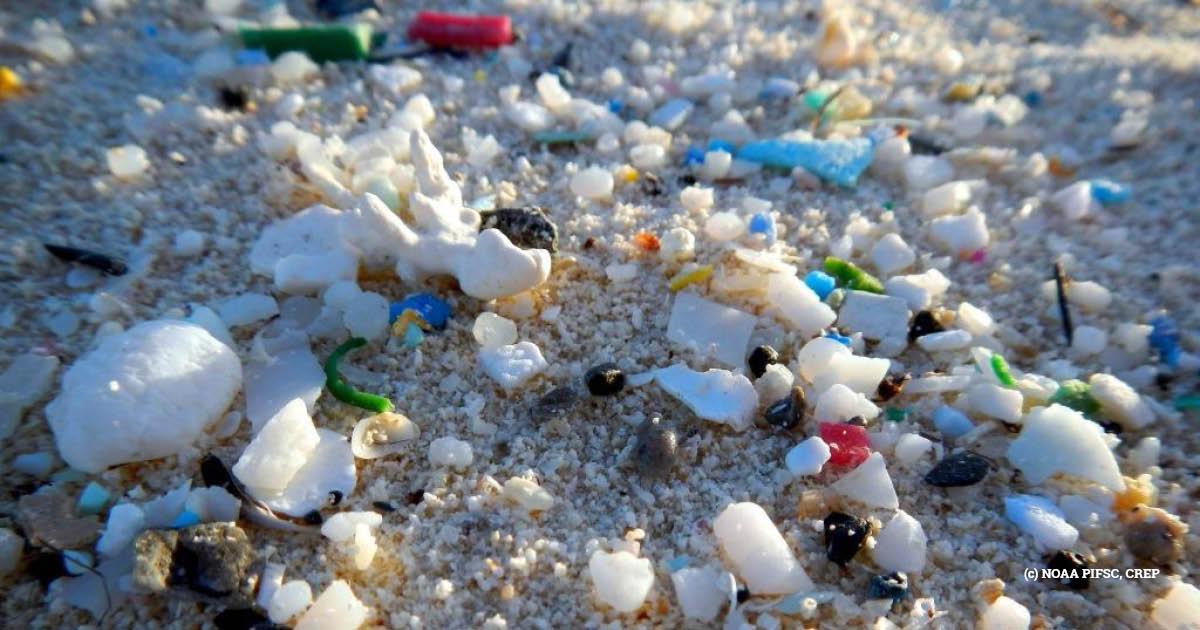 Microplastic beach litter (c) NOAA PIFSC, CREP
