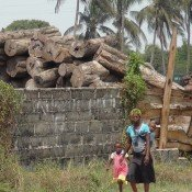 China's illegal timber imports ransack Mozambique's forests