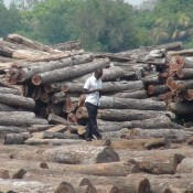 Mozambique timber probe a test of ability to enforce law