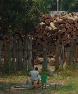 Log yard in Mozambique (c) EIA