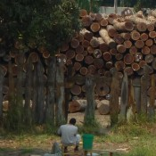 Mozambique loses a fortune to illegal timber exports