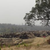 Myanmar teak importers violate European law
