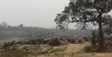 myanmar-timber-enterprise-log-depot-sagaing-division-myanmar-c-eia
