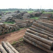 A Tale of Two Laws: EIA files precedent-setting timber cases