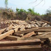 Myanmar rosewood stolen to feed China's furniture craze