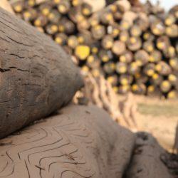 Myanmar timber, Dagon