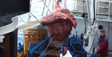 Norway whaler unloading (c) EIA