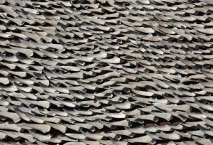 Over ten thousand pieces of shark fins are dried on the rooftop of a factory building in Hong Kong (c) REUTERS - Bobby Yip