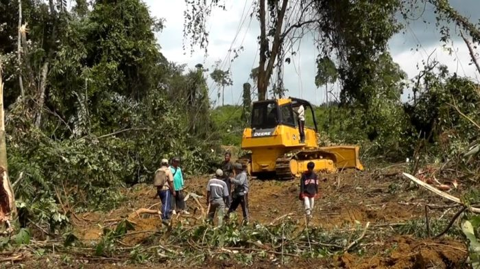 Palm oil firm bulldozer in Muara Tae, Indonesia, October 2012 (c) EIAimage