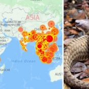 Updated map shows no let-up in illegal pangolin trade