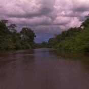 Illegal wood from Peruvian Amazon is entering the USA