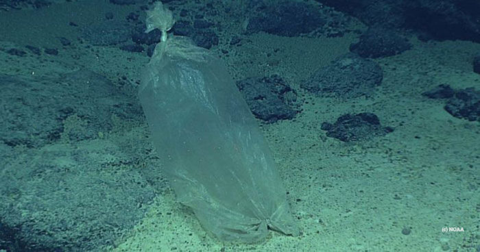 Plastic bag found by a NOAA expedition to the Marianas in 2016 (NOAA)