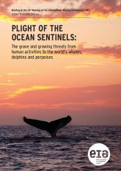 Plight of the Ocean Sentinels