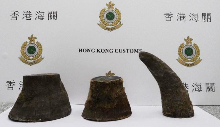 Rhino horns seized in Hong Kong, June 2017, by Hong Kong Customs