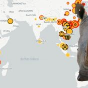 Illegal trade map for World Rhino Day reveals new trends in trafficking