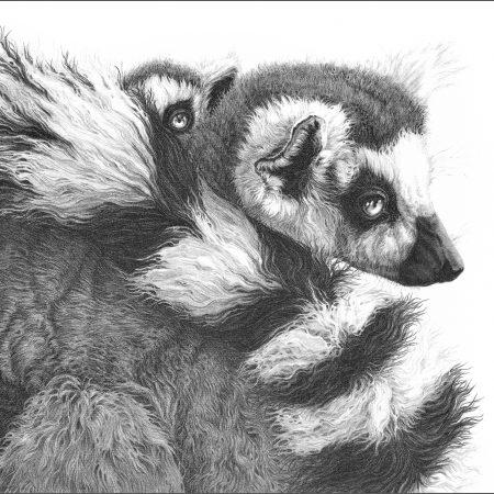 https://eia-international.org/wp-content/uploads/Ring-tailed-lemurs_gary_hodges_web.jpg
