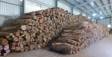 Rosewood logs stored in a warehouse, Dong Ha, Vietnam (c) EIA