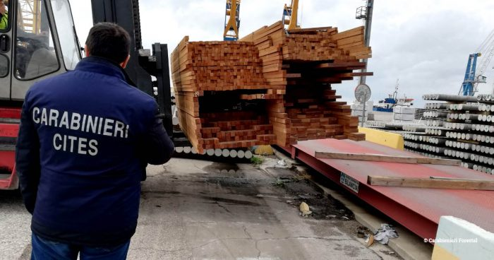 Italian Carabinieri standing close to seized Myanmar teak on a forklift at Trieste port