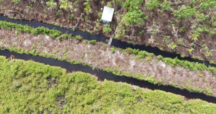 Sebangau deforestation