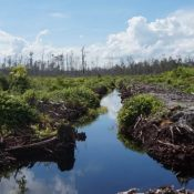 Forest and peatland burning changes Sebangau National Park to oil palm plantations