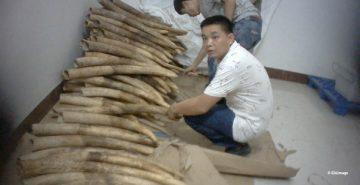 Shuidong ivory viewing