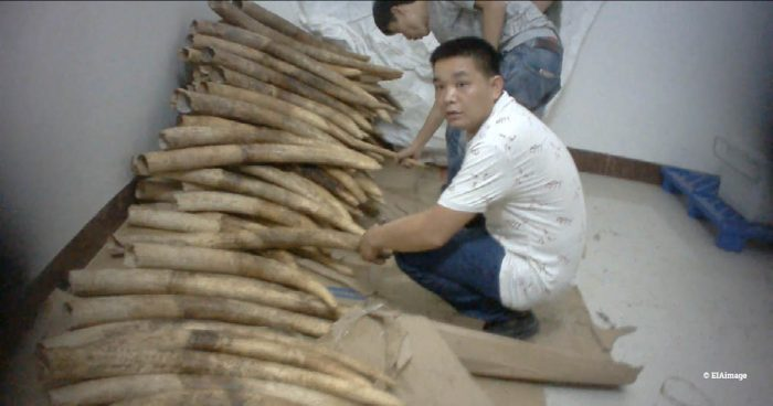 Shuidong ivory viewing