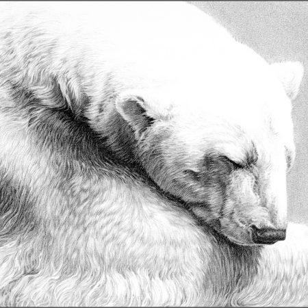 https://eia-international.org/wp-content/uploads/Snow-Bear_gary_hodges_web.jpg