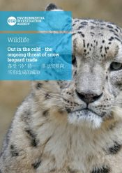 Out in the cold – The ongoing threat of snow leopard trade
