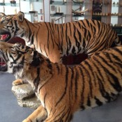 Laos' Sin City's an illegal wildlife supermarket for Chinese tourists