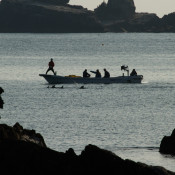 New footage of dolphin hunts in Taiji's notorious cove